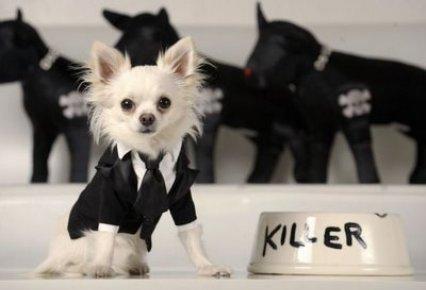 Disfraza tu perro estos carnavales